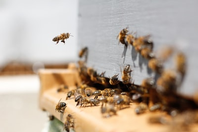 What to Do With Your Caged Bees
