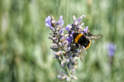 How bees use our planet to keep pollinators alive