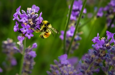 How to stop bee stings and other bee-related health risks