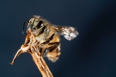 How to dig a bee hive in a week